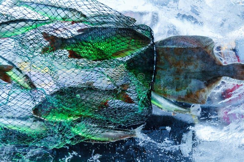 兵马俑钓鱼在节日的冰里面在叶尔加瓦,拉脱维亚在2019年2月9日 库存图片