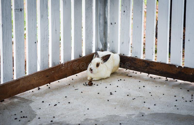 兔子农场 图库摄影