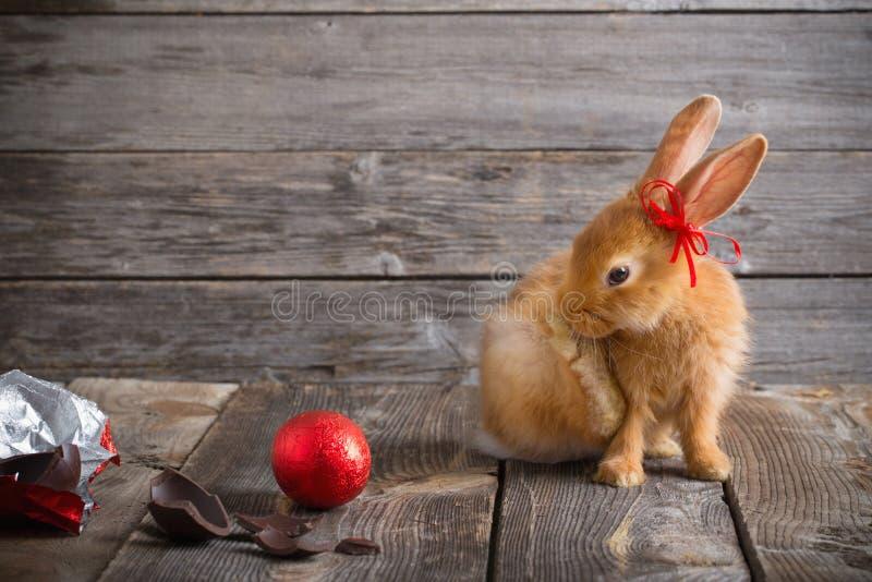 兔子用在木背景的朱古力蛋 免版税库存照片