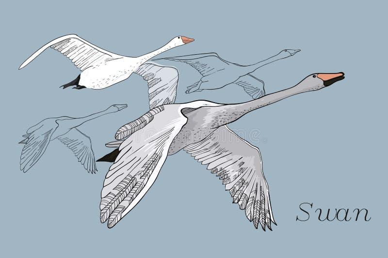 图画飞行天鹅的例证 手拉,与鸟的乱画图形设计 在蓝色背景的被隔绝的对象 免版税库存照片