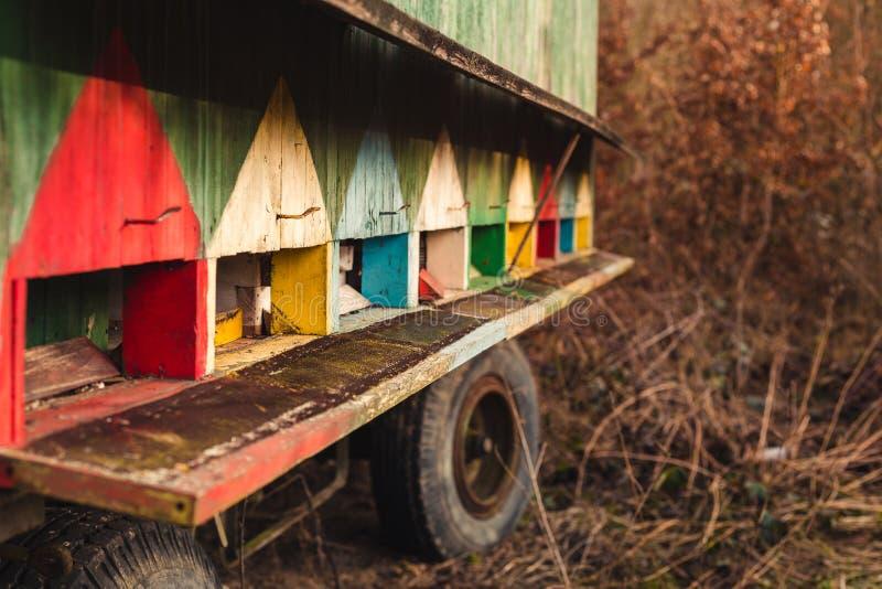 图象-在轮子的美丽的色的木蜂箱在森林旁边的草甸日落的 五颜六色的移动的蜂箱蜂房 库存照片