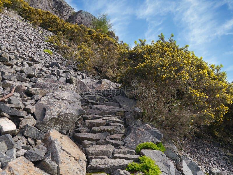 Ścieżka przez skał z kolcolistem przy stroną fotografia royalty free