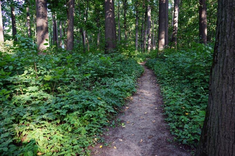 Ścieżka w miasta lata parku zdjęcia royalty free