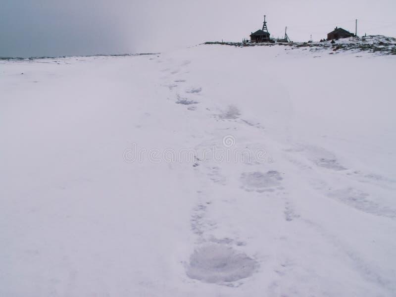 Ślada niedźwiedź polarny w śniegu obrazy stock
