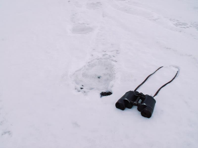 Ślada niedźwiedź polarny w śniegu zdjęcie stock