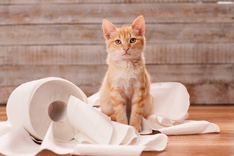 Śliczny pomarańczowy tabby figlarki obsiadanie na resztkach papier toaletowy rolka obraz stock