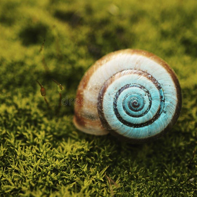 Ślimaczek w naturze zdjęcie stock