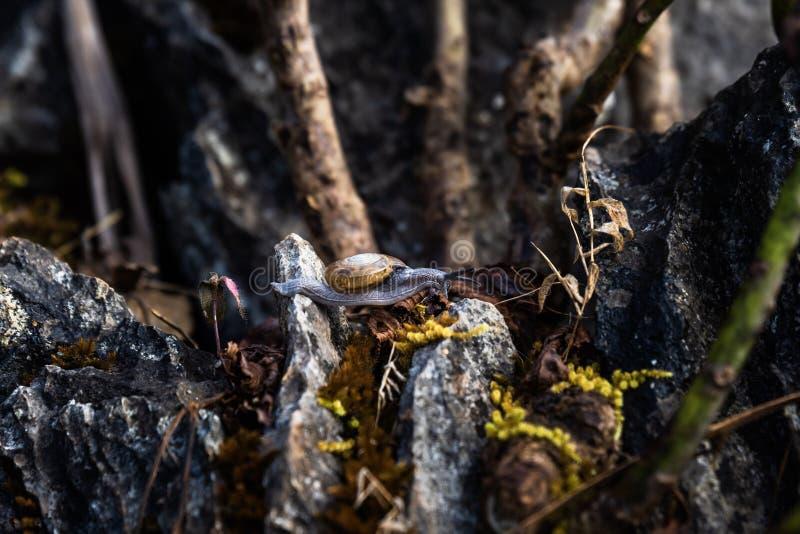 Ślimaczki w tropikalnym lesie tropikalnym zdjęcia stock