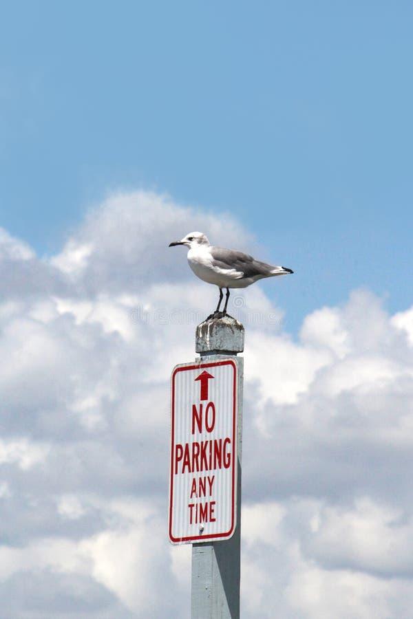 Śmieszni Seagull stojaki Na Żadny parking znaku zdjęcie stock