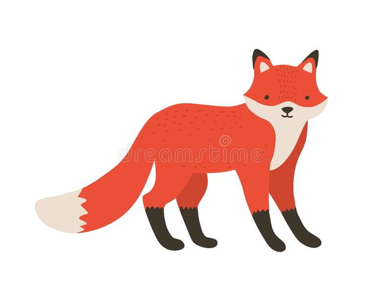 Śmieszny owłosiony mały lis Uroczy uroczy puszysty lasowy mięsożerny zwierzę odizolowywający na białym tle Śliczny śmieszyć royalty ilustracja