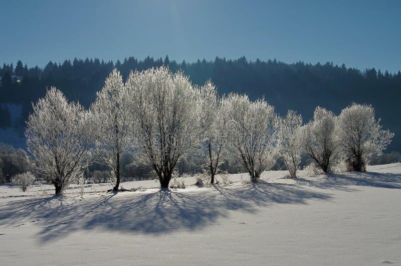 Śnieżny krajobraz przy wschód słońca, marznący drzewa w zimie fotografia stock