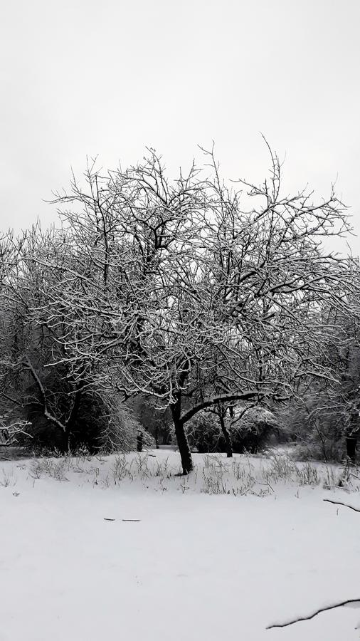 śnieg zdjęcie stock