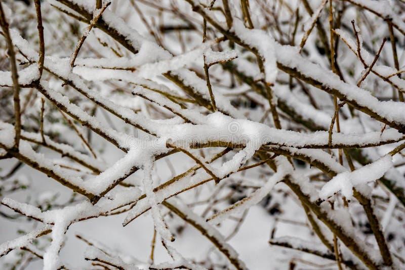 Śnieg Zakrywający Rozgałęzia się ideał dla tła fotografia royalty free