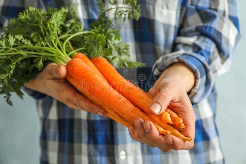 Średniorolny mężczyzna trzyma dojrzałe marchewki z wierzchołkami obraz stock