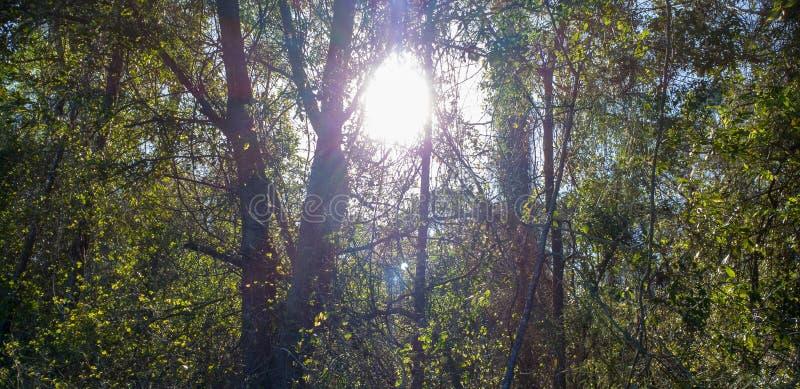 Światła słonecznego spoglądanie Przez linia horyzontu drzewa obrazy stock
