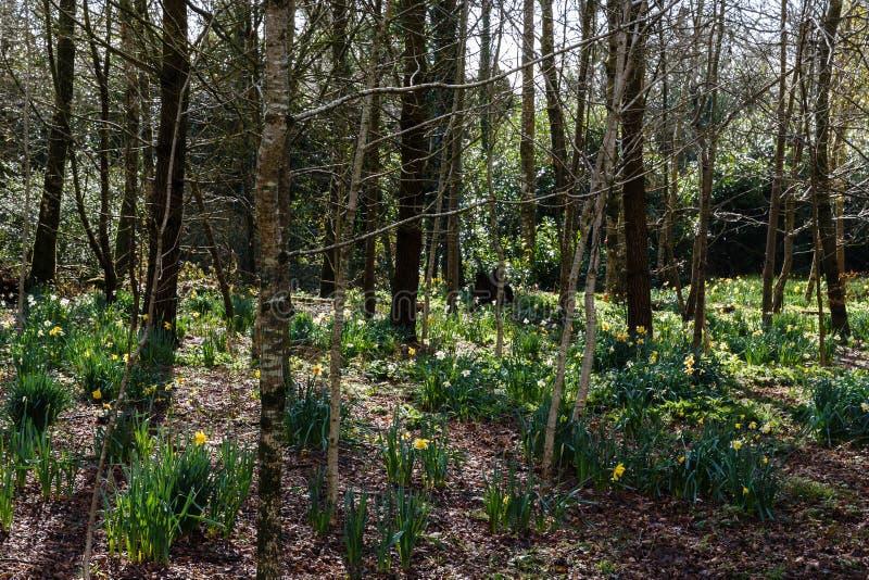 Światło słoneczne błyszczy w lesie obrazy royalty free