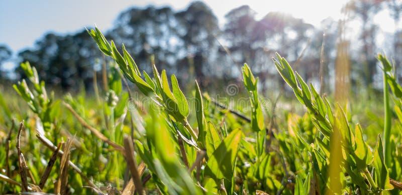Świderkowaty słońce w łące trawa i kwiaty fotografia royalty free