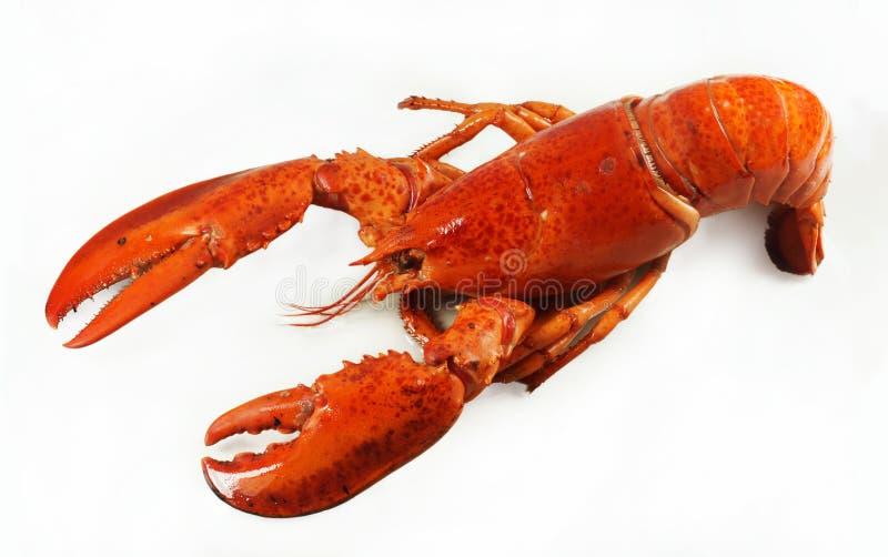 Świeży amerykański homar, cała sylwetka na białym tle smaczne statku zdjęcia royalty free
