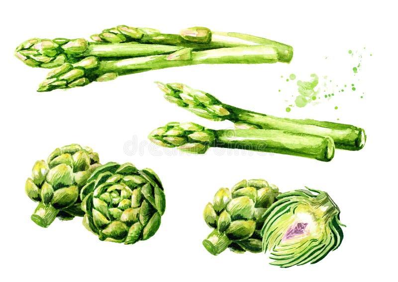 Świeży zielony asparagus i karczochy ustawiający Akwareli ręka rysująca ilustracja, odizolowywająca na białym tle royalty ilustracja