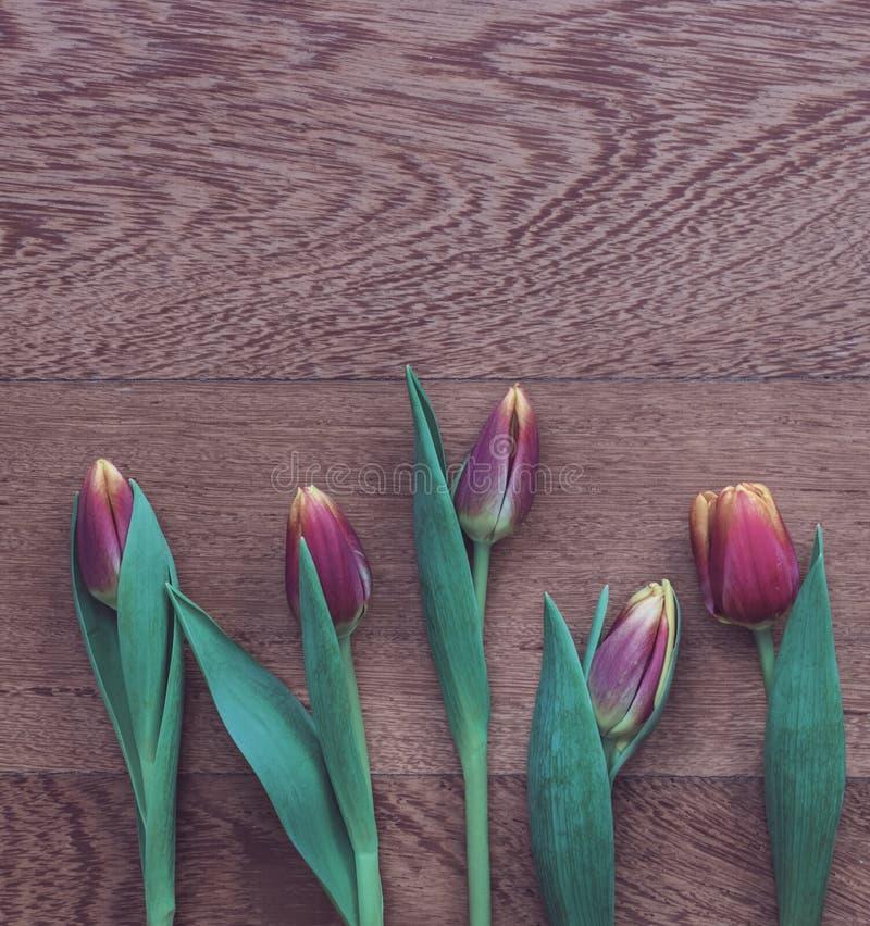 Świezi czerwieni, menchii i koloru żółtego tulipany na drewnianym tle, obrazy stock