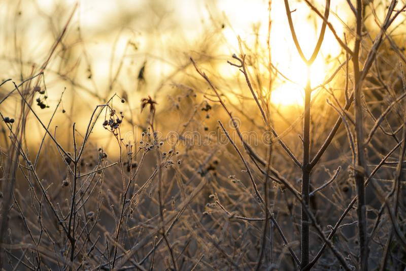 Świtu Złoty światło obrazy stock