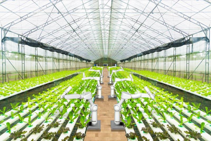 喷洒农业机器人的水或查出杂草在水耕的庭院,技术聪明的农厂概念里 库存图片