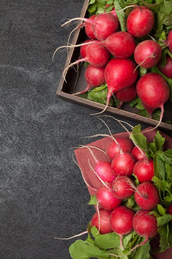 Åkerbruk bakgrund för rädisa, ljus frunch, ny mat arkivfoton