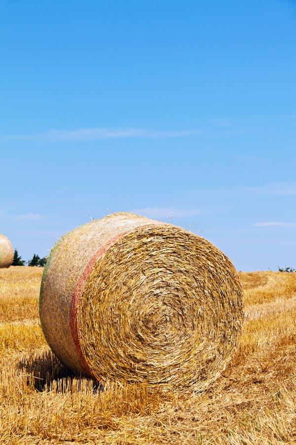 åkerbruk balfältsugrör arkivfoto