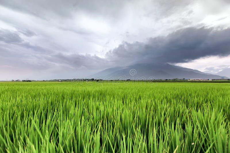 Åkerbruk bild av högväxta skördar i bygd av Taiwan royaltyfri fotografi
