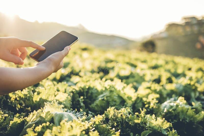 Åkerbruk bonde som kontrollerar touchpaden i Nappa kål Fram i sommar royaltyfri fotografi