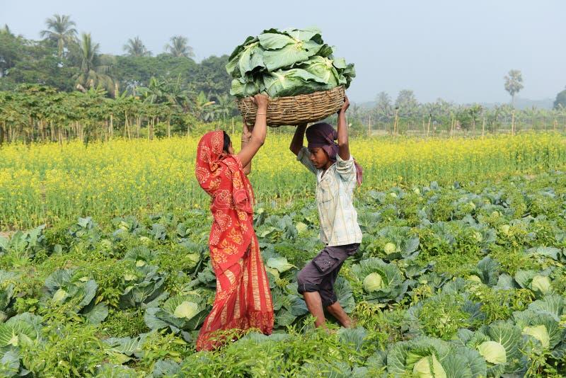 åkerbruk indier royaltyfri foto