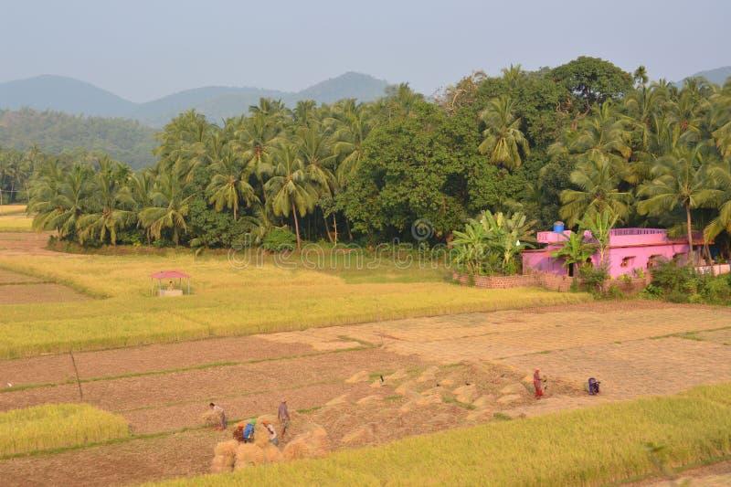 åkerbruk indier fotografering för bildbyråer