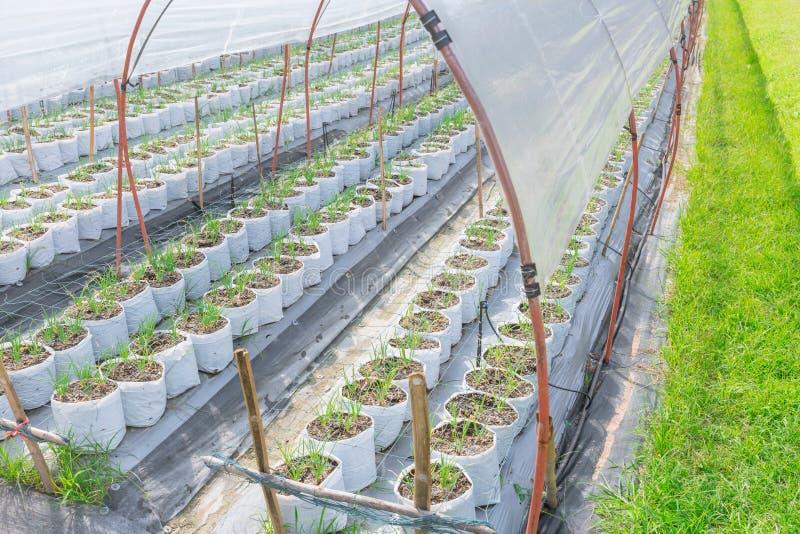 Åkerbruk lantgård i grönt hus för parasoll arkivbild