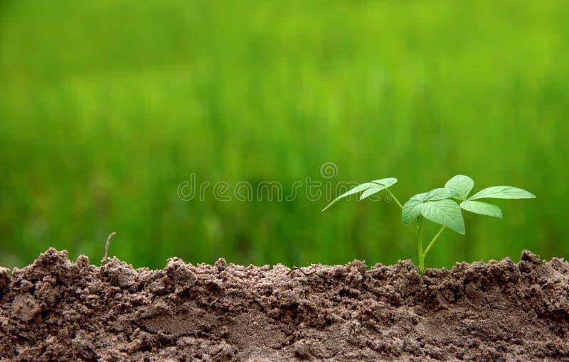 Åkerbruk miljö på växande momentbegrepp för natur royaltyfria foton