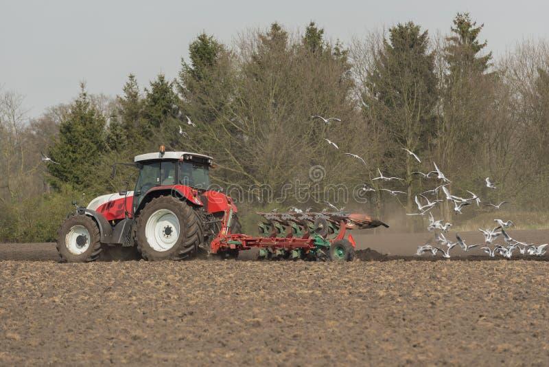 Åkerbruk plöja traktor med seagulls royaltyfri bild