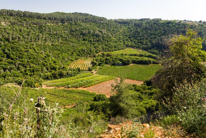 Åkerbruk sikt för vingårdområdesfält arkivfoto