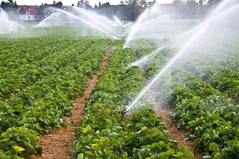åkerbruk sprayvatten fotografering för bildbyråer