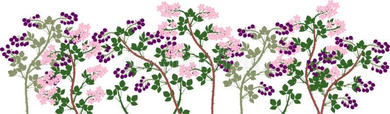 Åkerbruk växtgräns Allmän sikt av gruppen av fruktbärande och blomma björnbärväxter med mogna bär, grön lövverk stock illustrationer