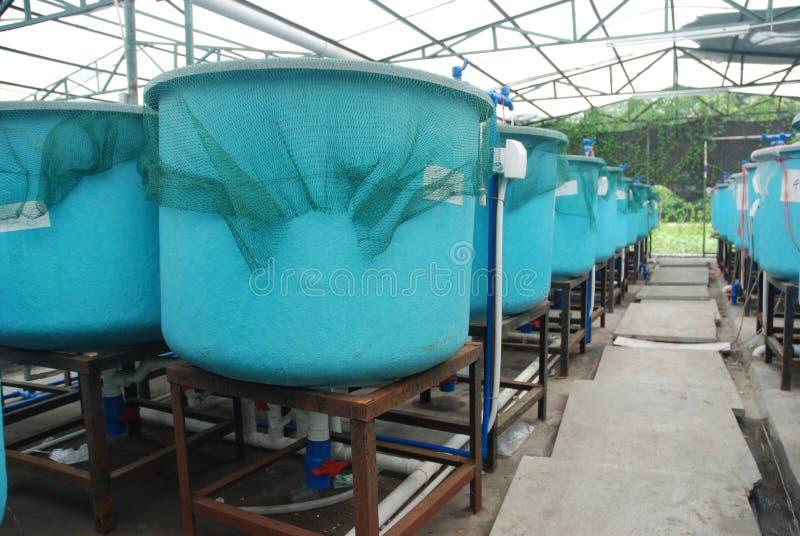 åkerbruk vattenbruklantgård royaltyfri bild