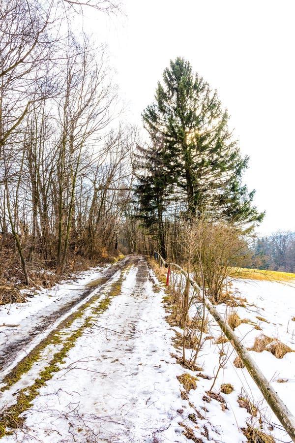 Åkerbrukt fält i snö och vinter Träd och gräs nära jorden och fältet royaltyfria bilder