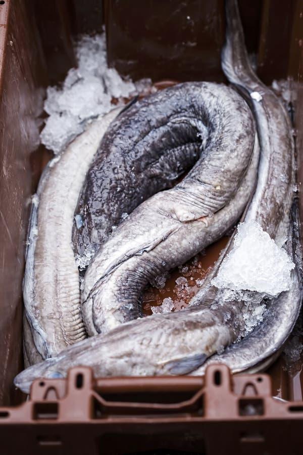 Ålar i behållare på fiskmarknad arkivfoton