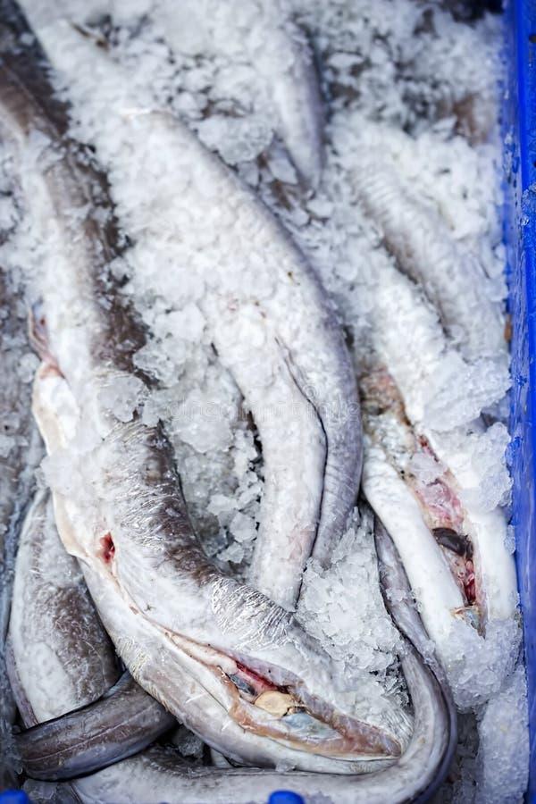 Ålar i behållare på fiskmarknad royaltyfri bild
