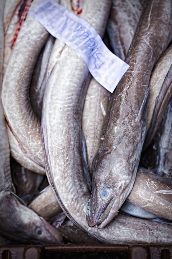 Ålar i behållare på fiskmarknad royaltyfria bilder