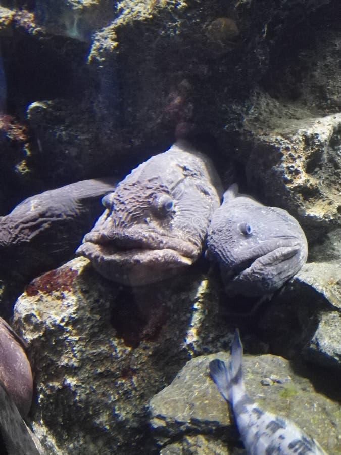 Ålar på det Enoshima akvariet royaltyfri foto