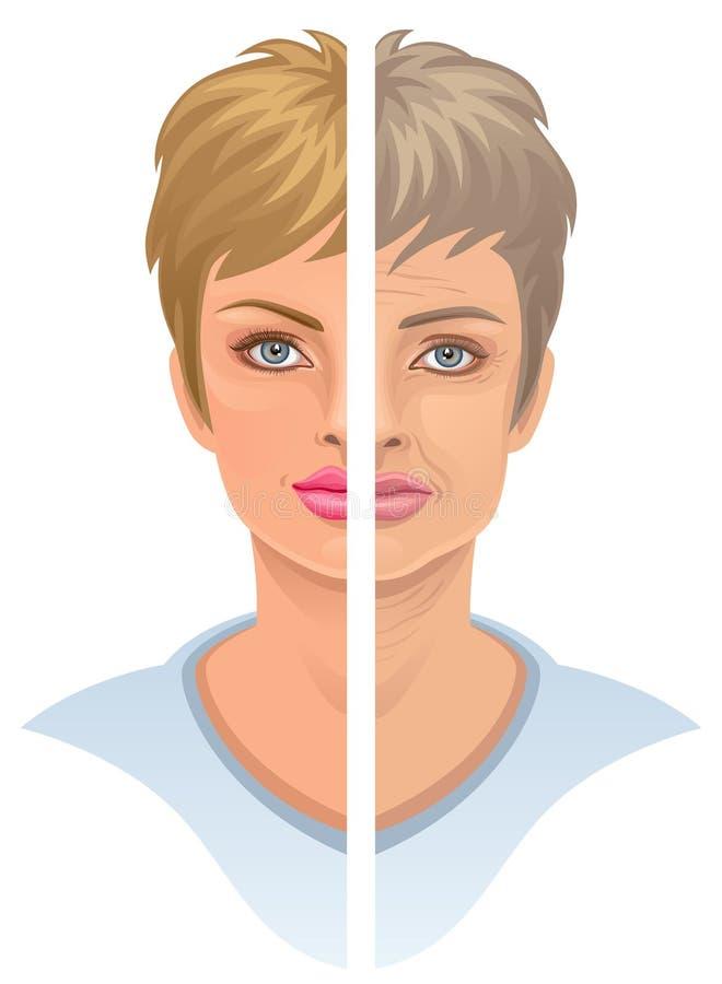 ålder vektor illustrationer