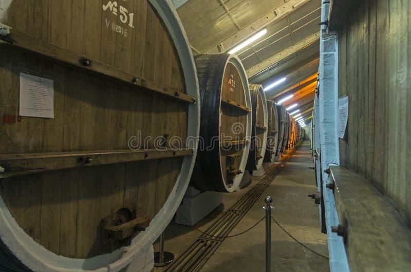 Åldras av viner i ektrummor crimea arkivfoto