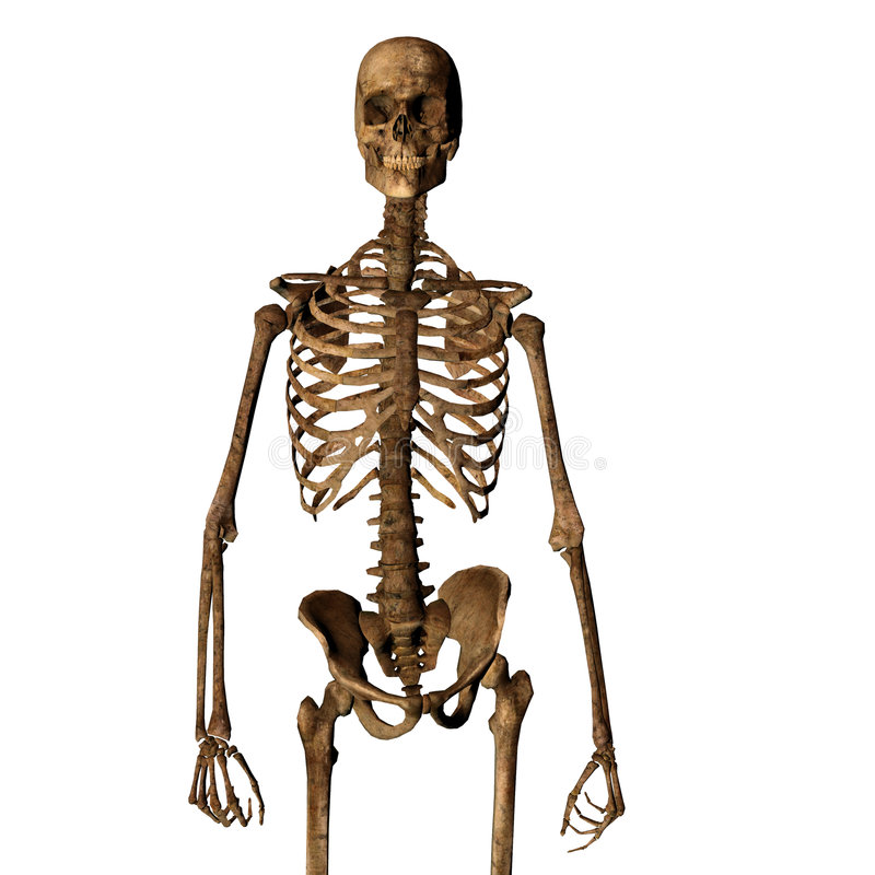 åldras mänskligt skelett stock illustrationer