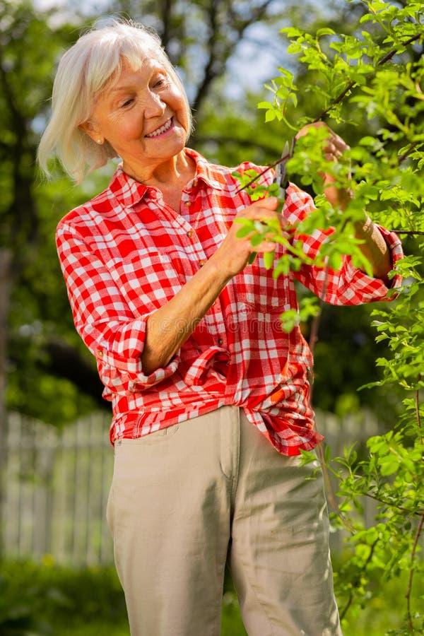 Åldrig kvinna som bär beige byxa som klipper filialer på träd royaltyfri fotografi