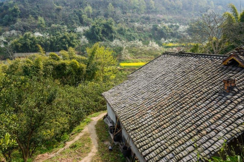 Åldrigt kinesiskt lantbrukarhem i blomningberg på solig spirng royaltyfri foto