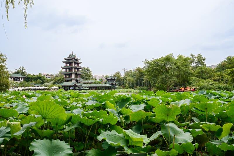 Åldrigt kinesiskt torn i sjön av lotusblommor på molnig sommardag royaltyfria foton